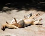 Fox Shake