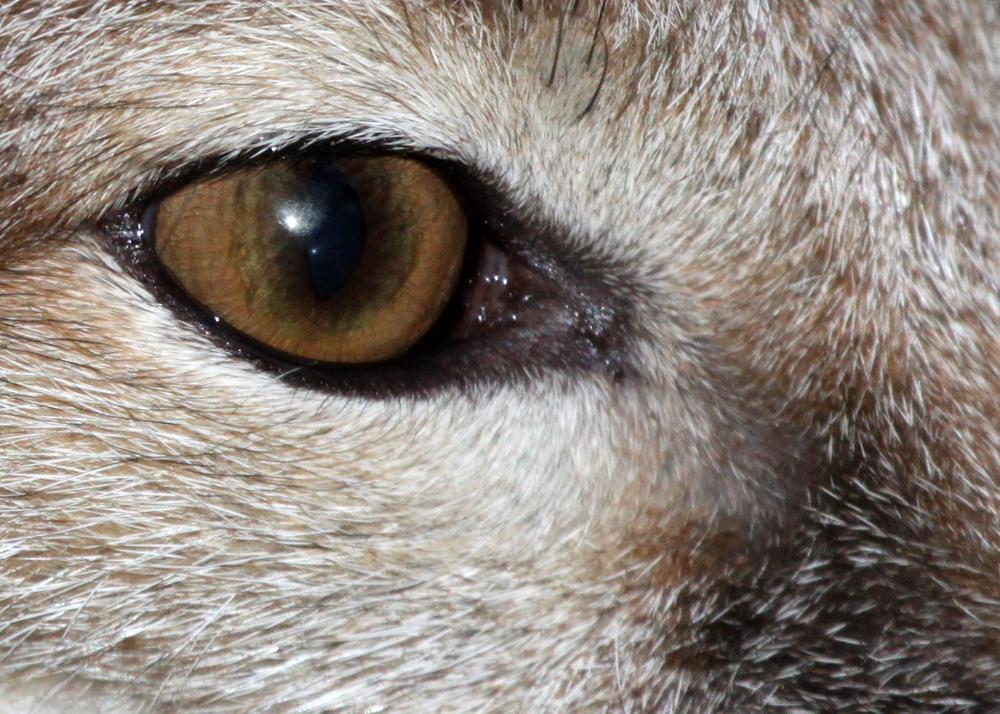 name fox eyes - photo #31