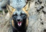 That's a Good Fox