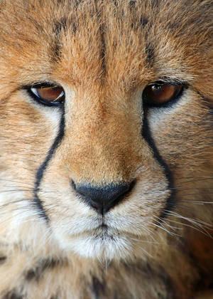 IITE Cheetah Cub by Jack-13