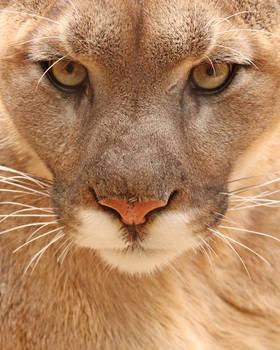 IITE Puma Full
