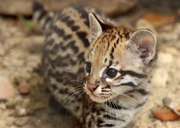 Kitten Whiskers