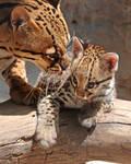 Momma and Kitten