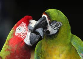 Sweet Lovebirds by Jack-13