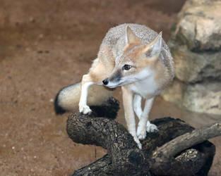 Swift Fox Nimble Paws by Jack-13