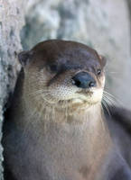 Otter Grumps by Jack-13