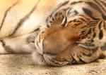 Ancient Tiger