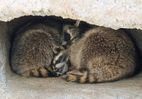 Napping Sisters