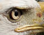 Eagle Eyed Close Up