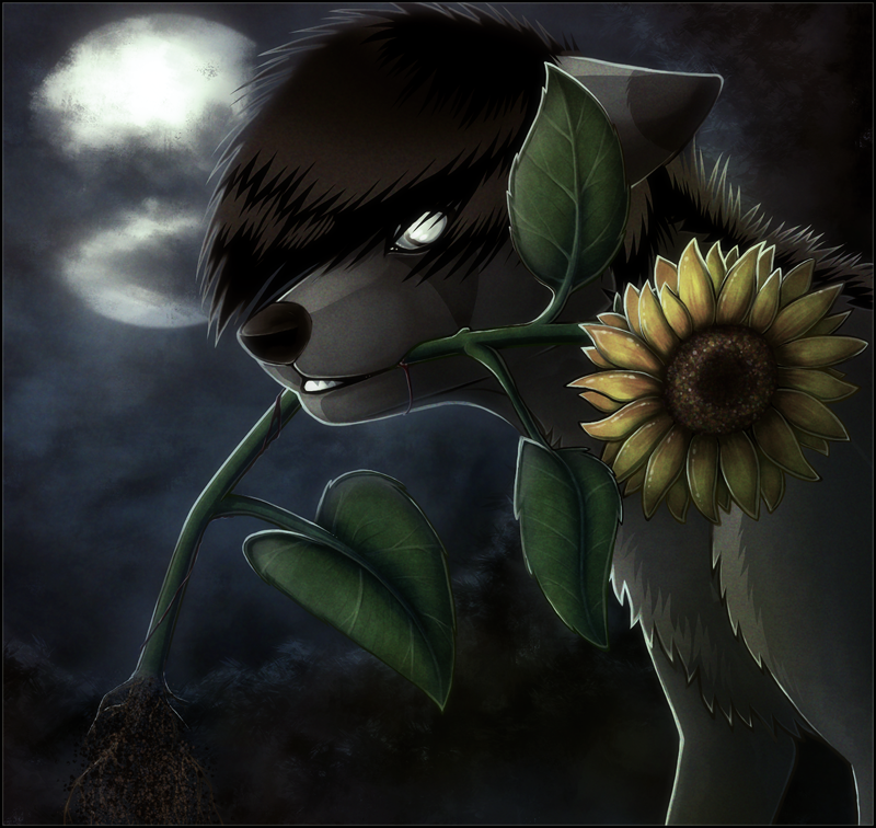 Sunflower by Detrah