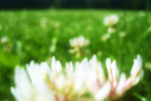6 feet under, 2 eyes in grass by biyavi