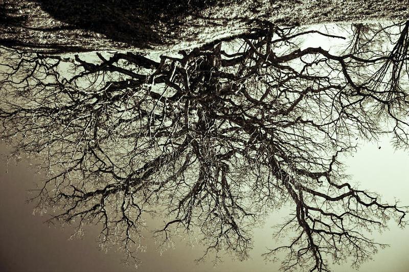 Roots by PicklesAddie
