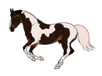 N5523 Star [natural stallion]
