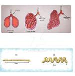 Desenho para material didatico