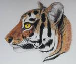 .:Tiger:. by Lemurka3789