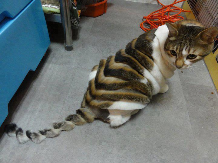 cat grooming melbourne fl