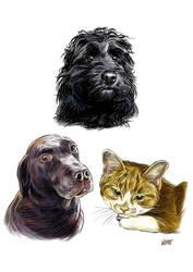 Alex's Pets by JustinWyatt