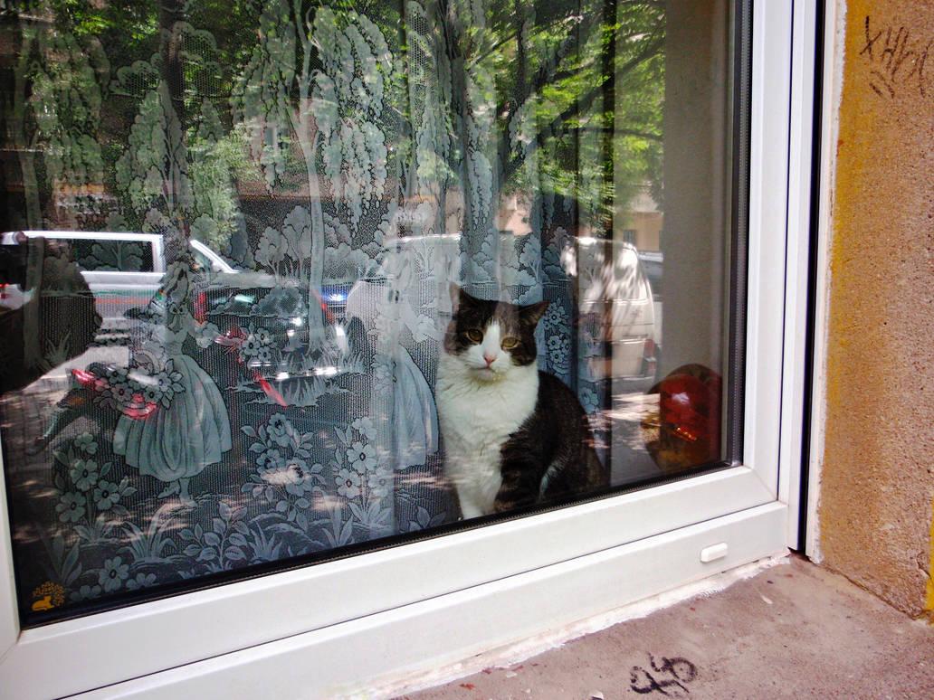 the cat in the window by Batsceba