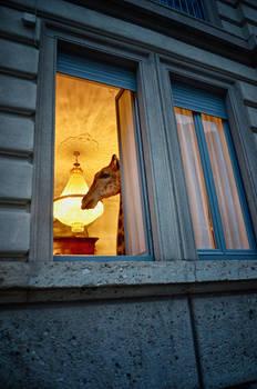Dsc0122 una Giraffa a Milano