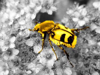 bug 2 by MattRose1