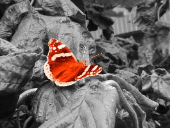 butterfly by MattRose1