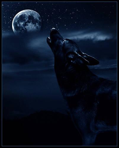 Mystical Wolf by T1U