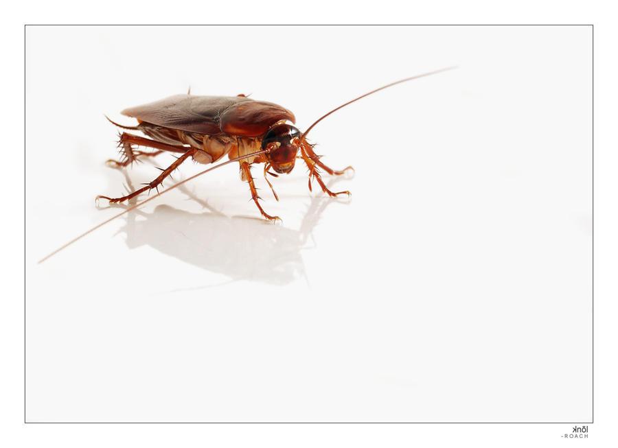 ledroach's Profile Picture