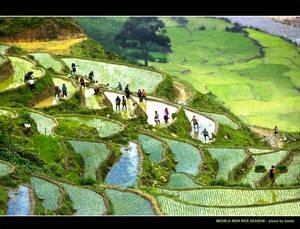 Begin a new rice season