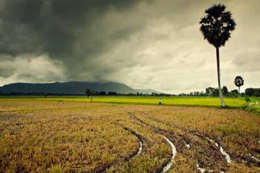 Storm Field