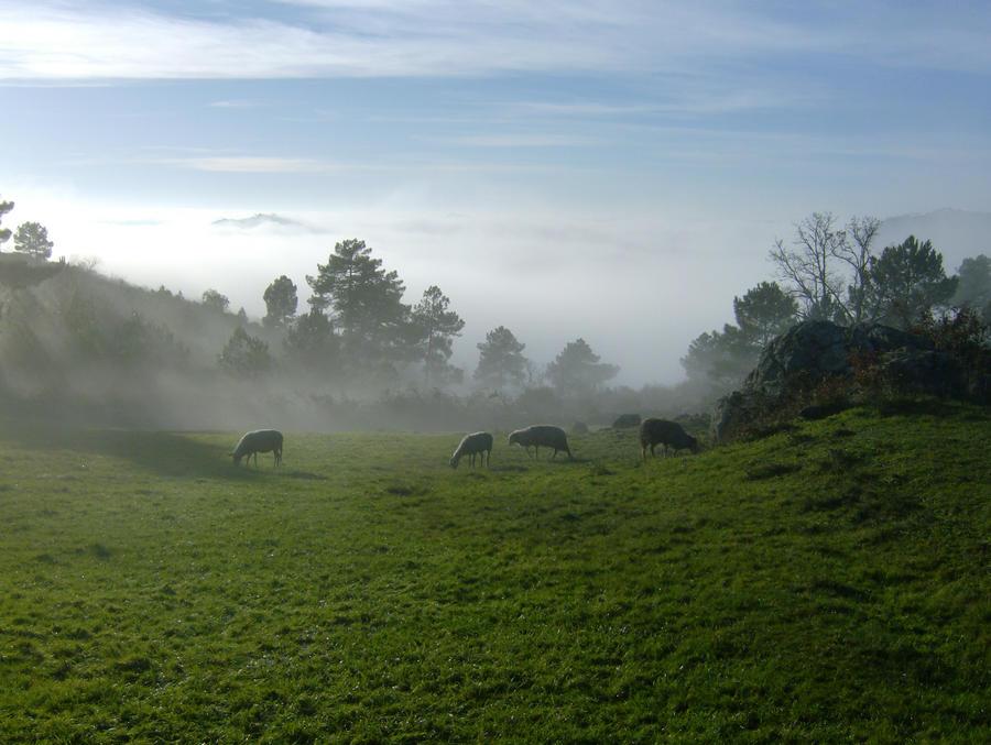 fog of peace by killo-4