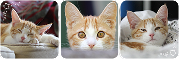 [f2u] meow!~ divider by starlitcat