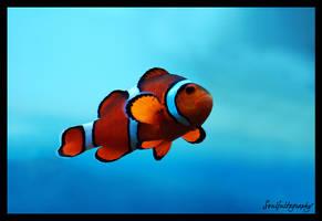 In A Sea Of Blue by fsuseaangel