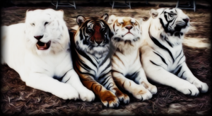 The Four Tigers Dark edition