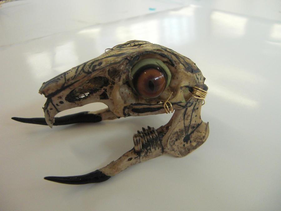 Rabbit skull front