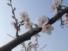 White Flowers Skyward