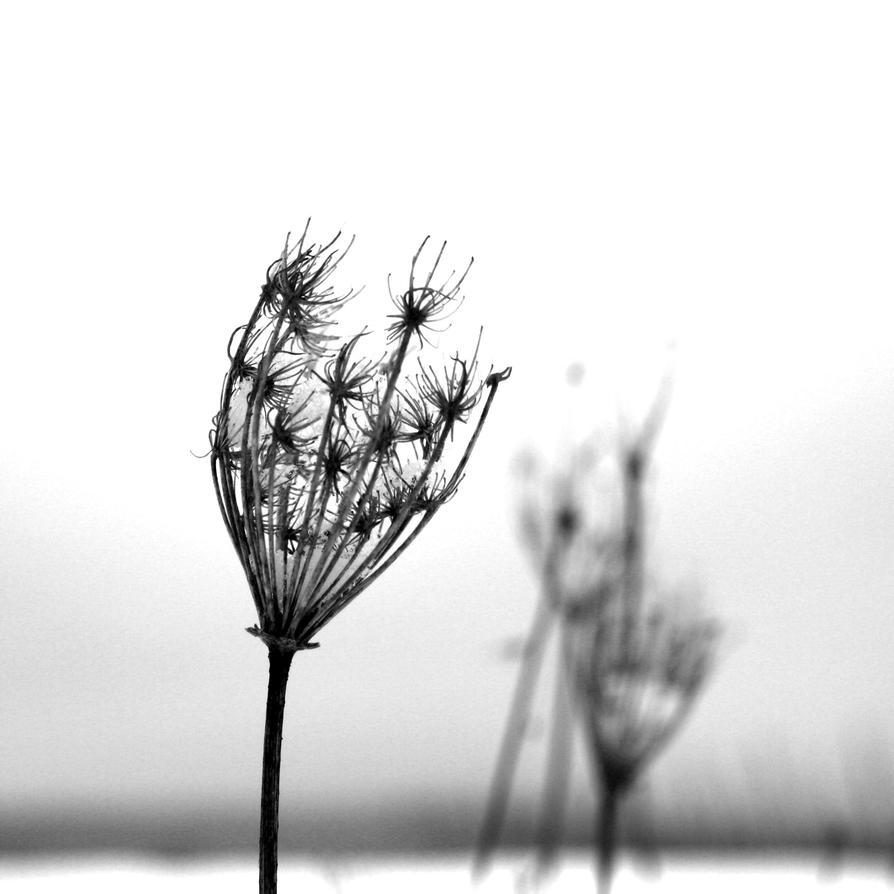 quiet by Knoetchen