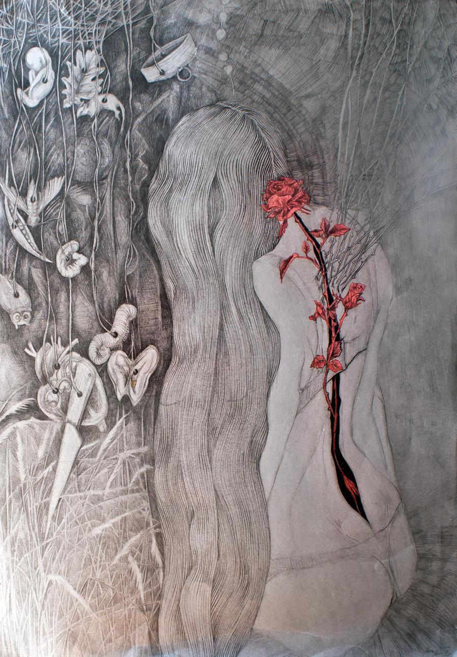 The rose by marzenaabl