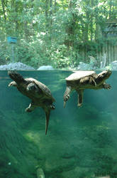 Turltes at the Toronto ZOO by GremlinzTattoo
