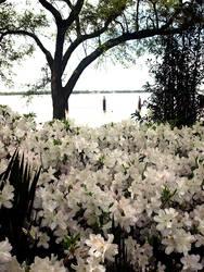 Rip Van Winkle Gardens 1
