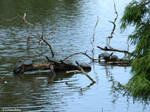 A Day in Lafreniere Park - 6 by Kicks02