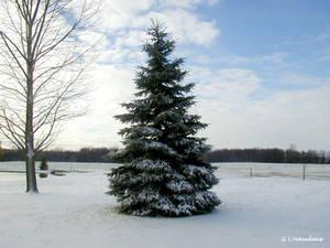 Thanksgiving 2004 - Xmas Tree