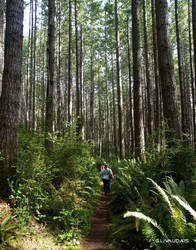 Guiellmot Cove - Tall Trees 2 by Kicks02