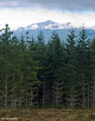 Olympic Peaks and Tall Trees by Kicks02