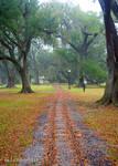 Tracks in the Park by Kicks02