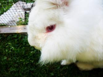 Rabbit by hollzzy
