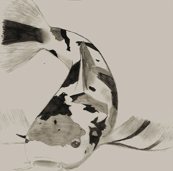 Koi Fish Pencil Drawing by coolbeans92 on DeviantArt