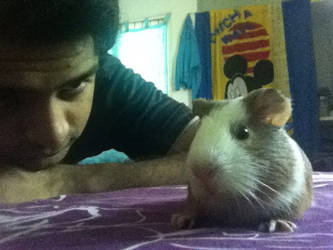 I love Cavy :D by corleno