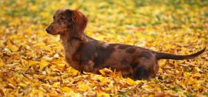 Camoflage dog by Ammyke