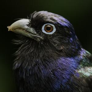 Nature-Photo-Master's Profile Picture