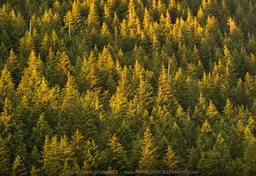Mountain Trees Sunset